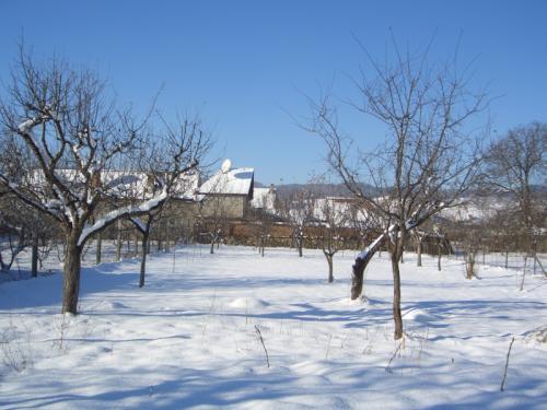 Livada iarna