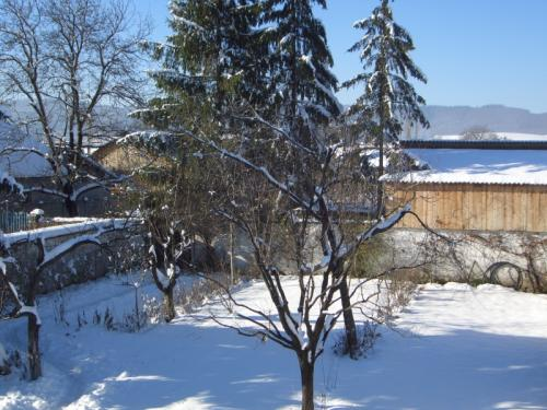 In gradina iarna